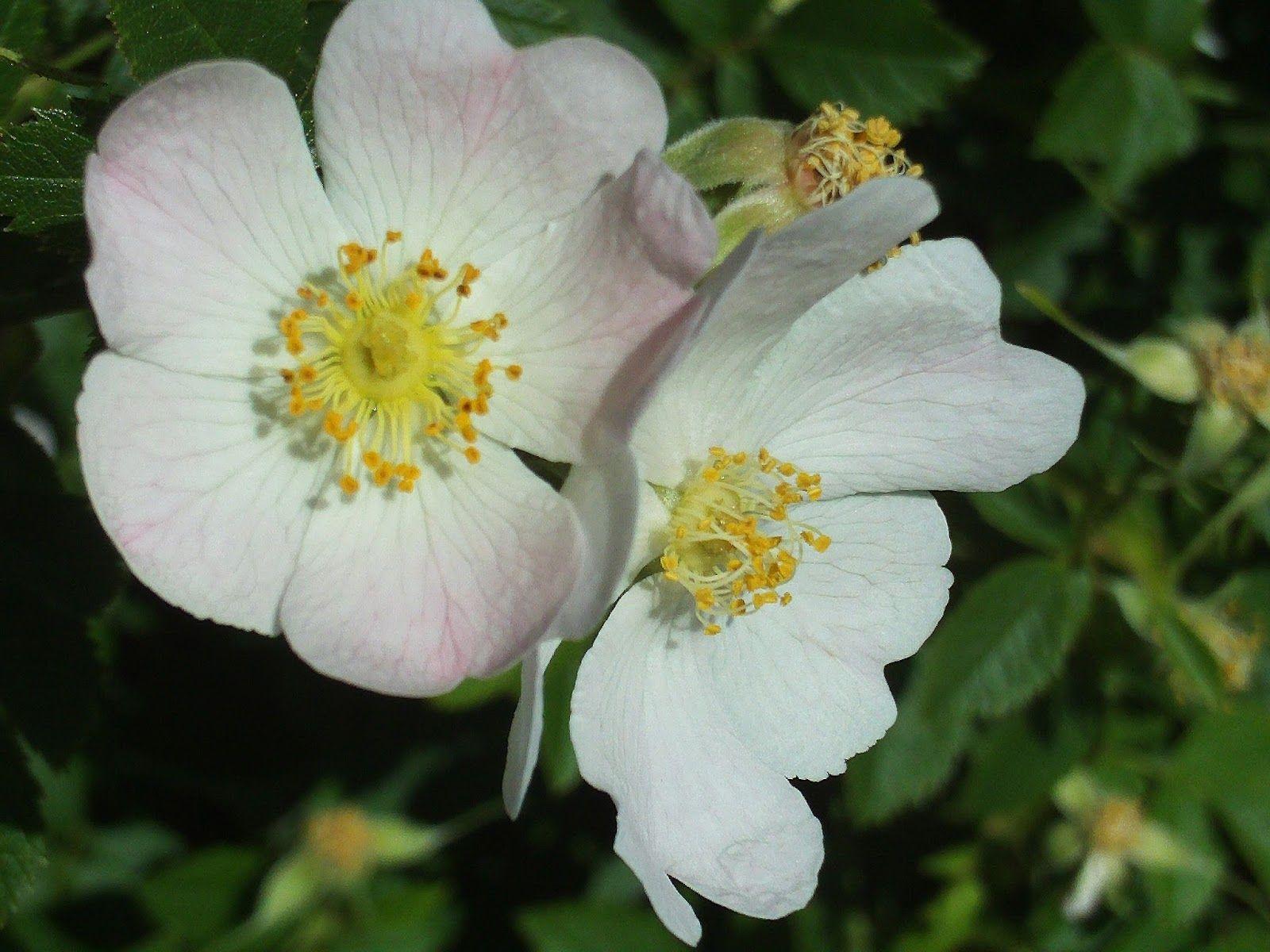 احلي صور ورود جميلة صور باقات ورد رومانسية صور زهور صور ورد بلدي احلي باقات ورد رومانسية لعيد الحب صور ازهار للبنات صور ورد احمر ور Rose Bush Wild Roses Rose