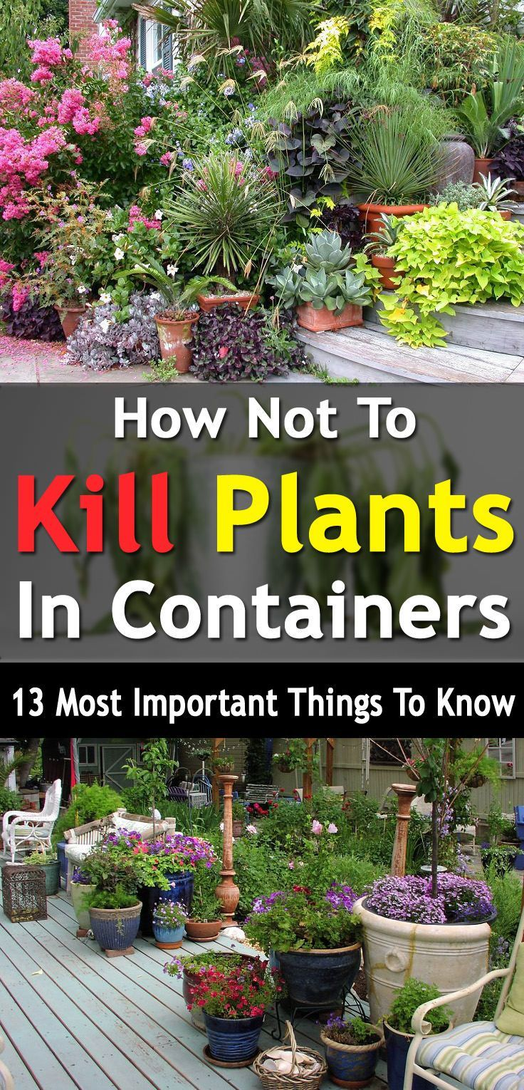 Not To Kill Plants In Containers, 13 Most Important Things To Know Do you kill your plants often? Well here're 13 things you must avoid to make your container plants keep growing.Do you kill your plants often? Well here're 13 things you must avoid to make your container plants keep growing.