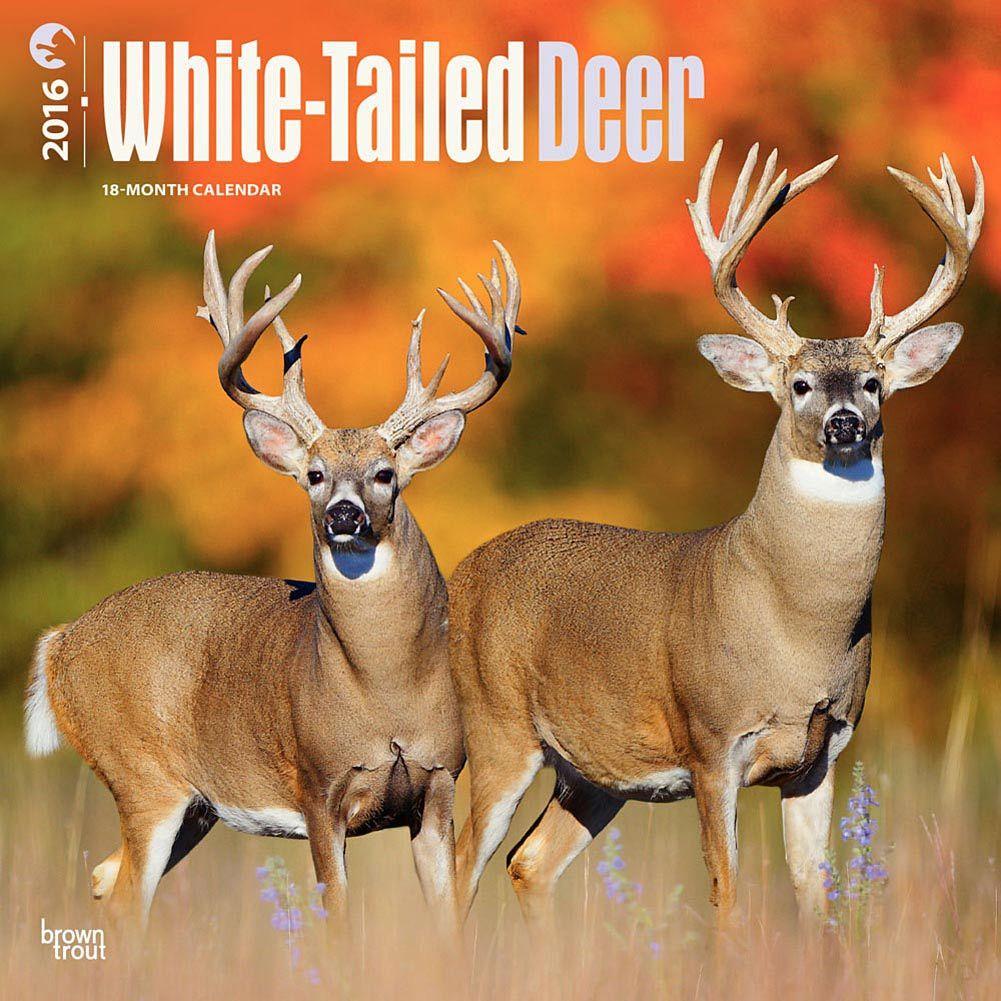 2017 Fish Bird Bears Calendars Whitetail Deer Deer Animals