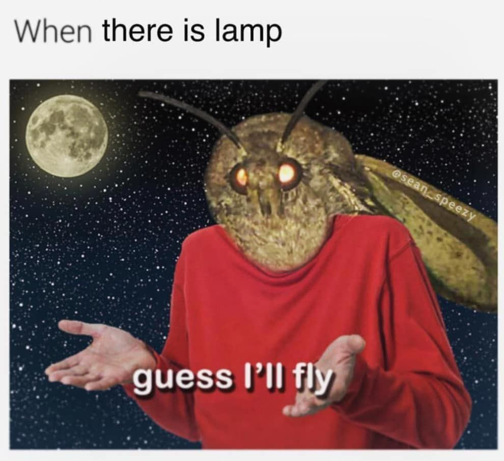 Please Enjoy These 32 Moth Memes That Made Me Cry From Laughing Funnymemes Funny Memes Memes Love Memes