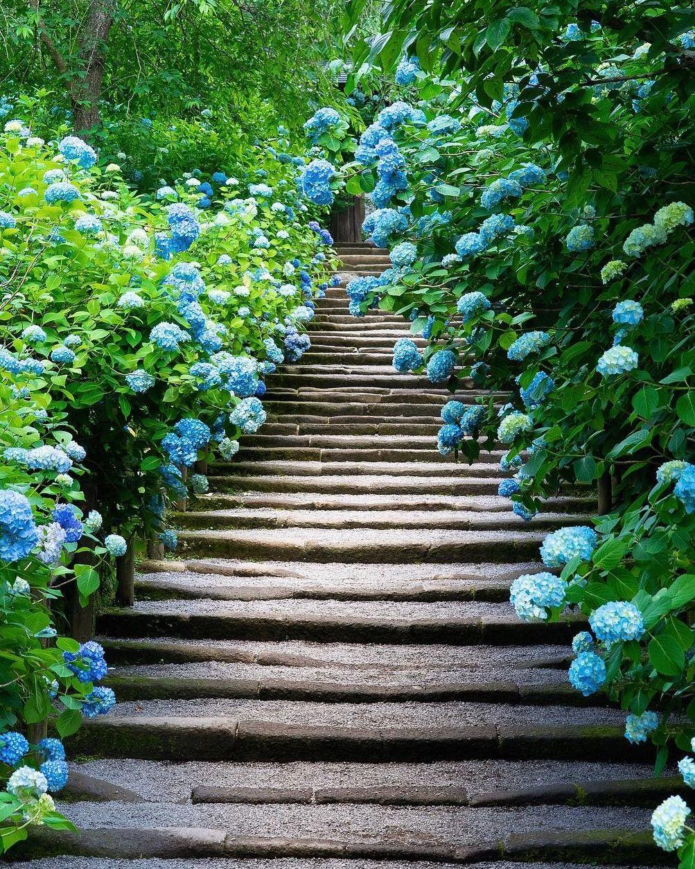 30 Pretty Front Door Flower Pots For A Good First Impression Planting Hydrangeas Plants Growing Hydrangeas