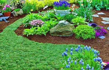 garden ideas thymus serpyllum elfin thyme good for lawn replacement and has pretty flowers when