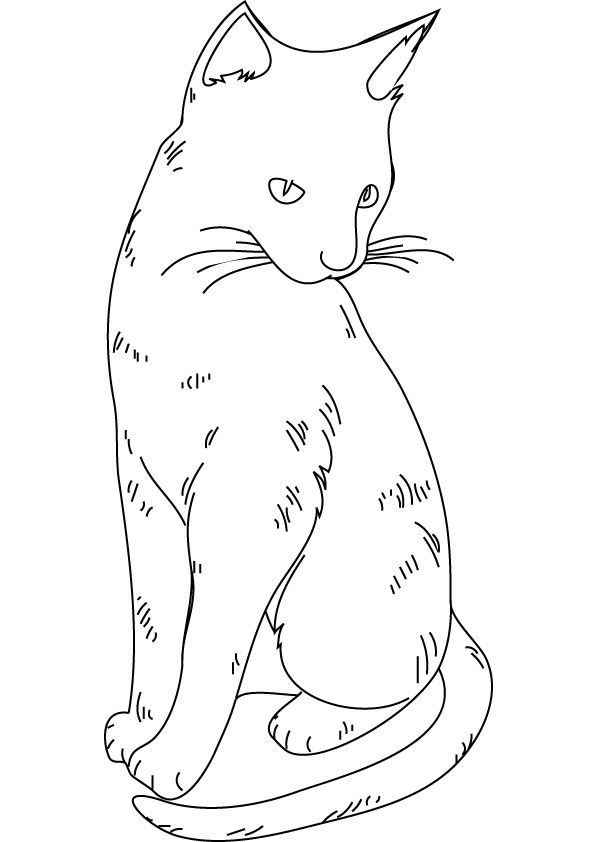 Fluffy Cat Coloring Page Cat Coloring Page Animal Coloring Pages Unicorn Coloring Pages