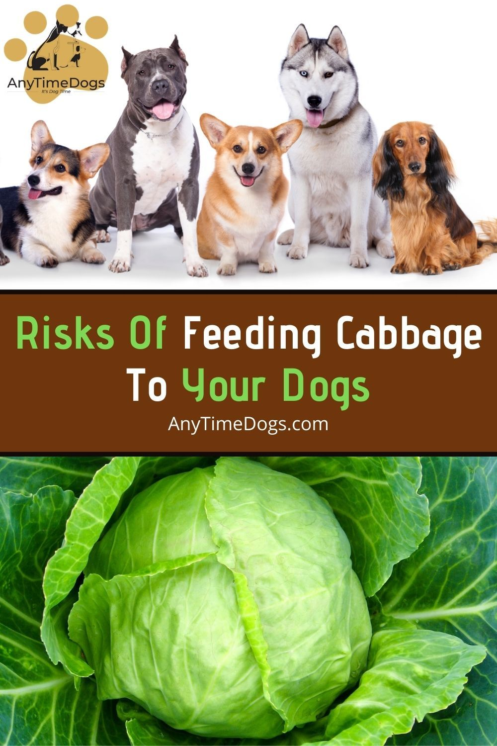 Risks Of Feeding Cabbage To Dogs In 2021 Dogs Can Dogs Eat Animals