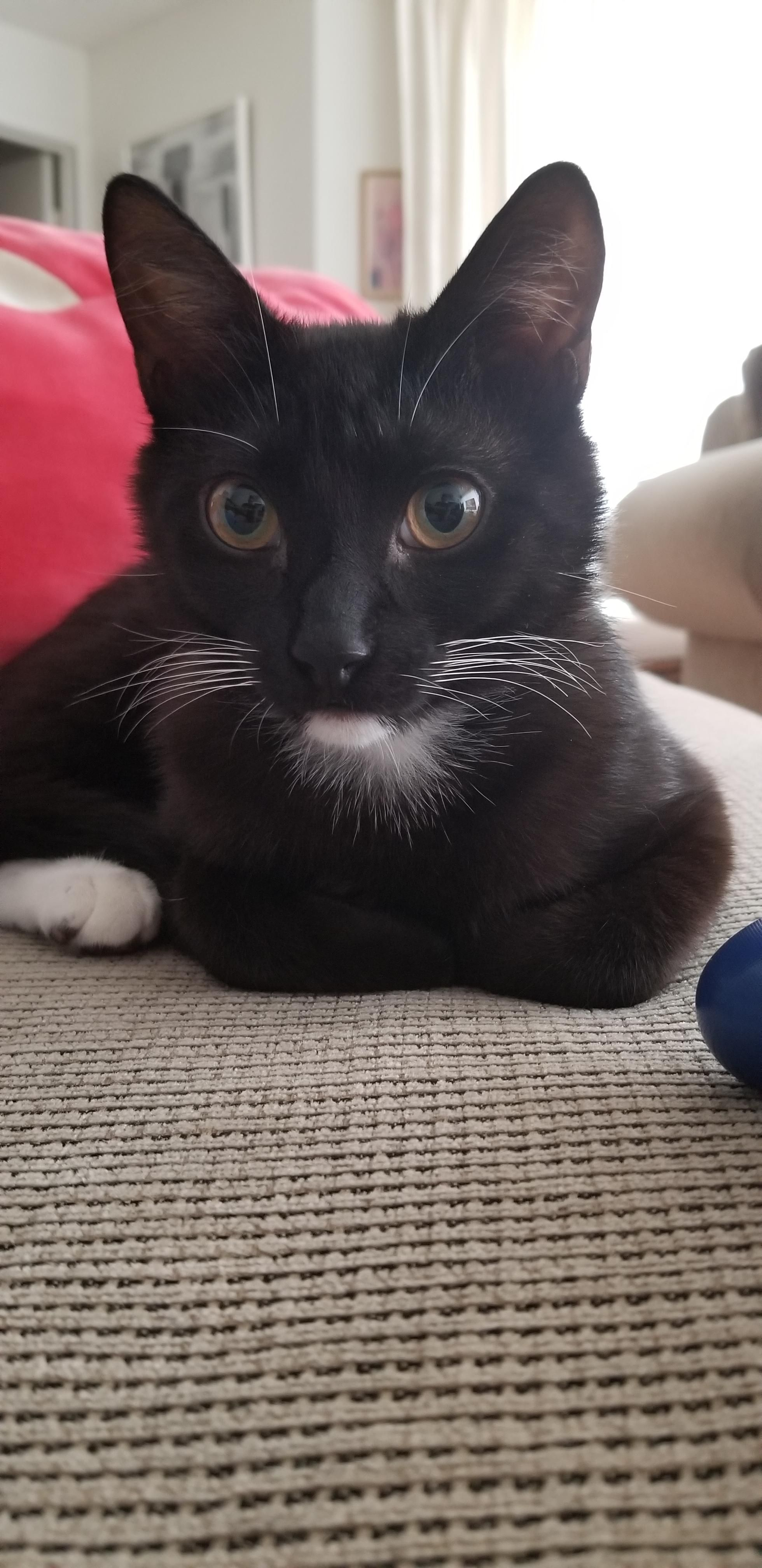 Reddit Meet My Handsome Boy Tk Tuxedo Kitty He S Trouble But He S My Sweet Handsome Boy Too Aww Cute Animals Cats Aww Cute Cats And Dogs Handsome Boys Cute Kitty