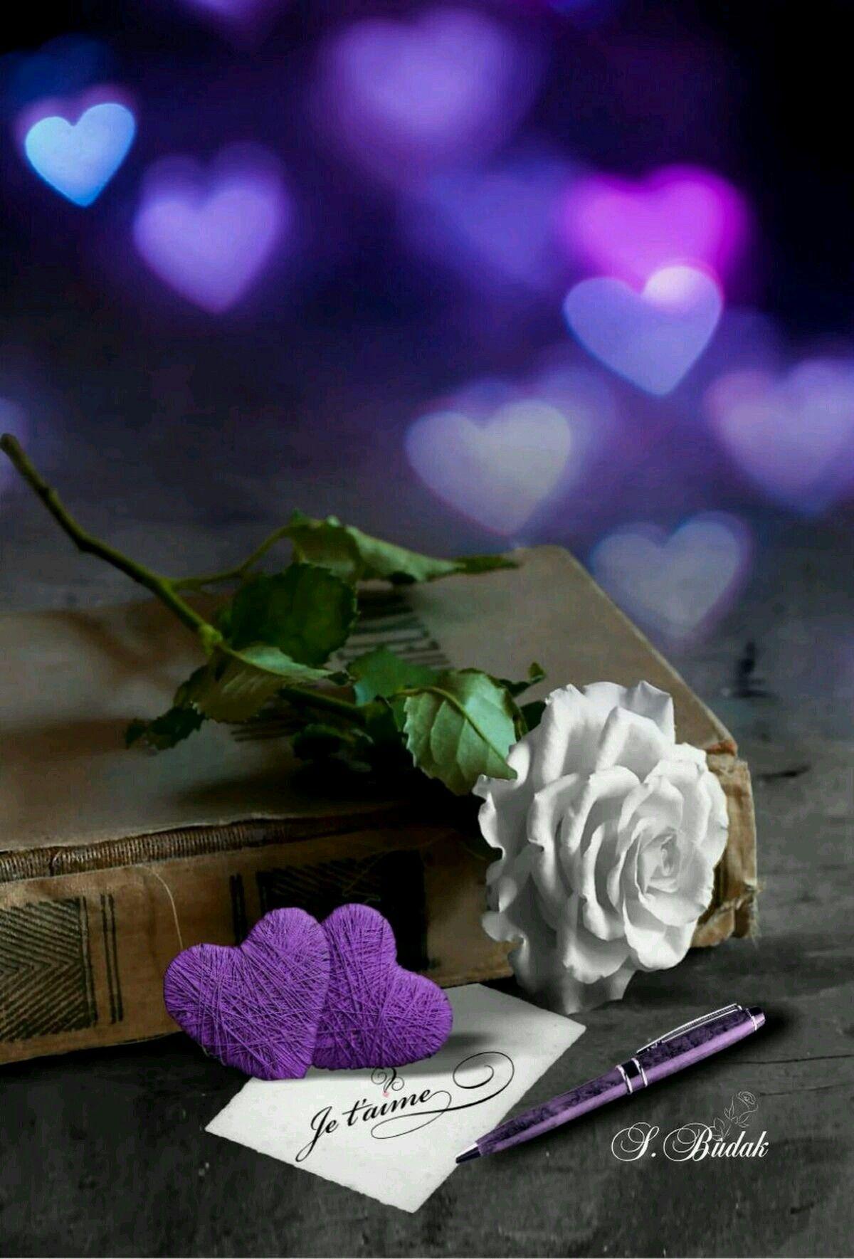Ahmet krtl m c pinterest flowers flower and ahmet krtl izmirmasajfo