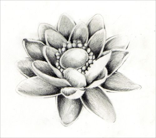 Lotus flowers drawings in pencil tattoo pinterest lotus flowers drawings in pencil mightylinksfo