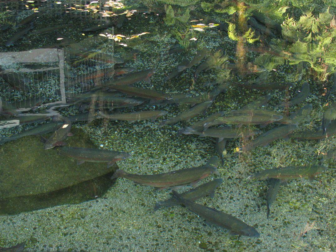 Fine gravel bottom pond waterfall pinterest pond for Garden pond gravel
