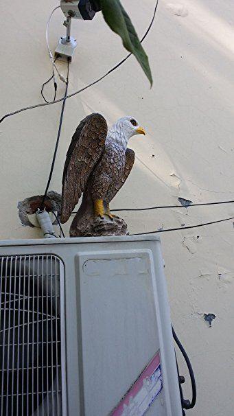 Zilin Plastic Bald Eagle Bird Scaring Deter Repellents Hawk Decoy Patio Lawn Garden