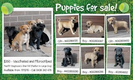 Large Breed Puppies Sale Poster On Gumtree Puppies For Sale