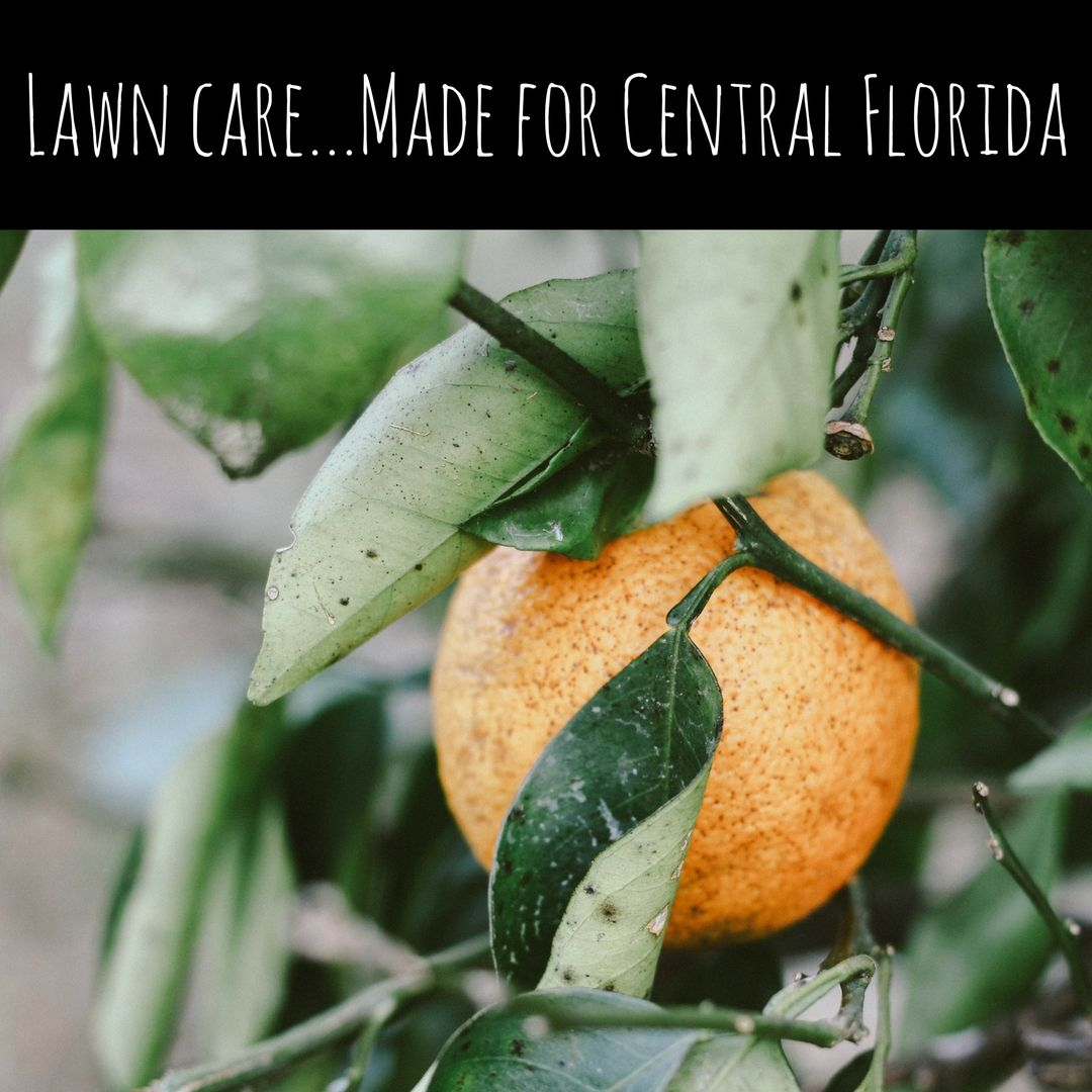 """Local Lawn Care Company Takes """"Central FloridaFirst"""