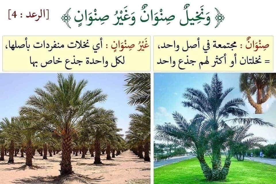 فوائد قرآنية Quran Arabic Love Quotes Salaah Graphic Wallpaper