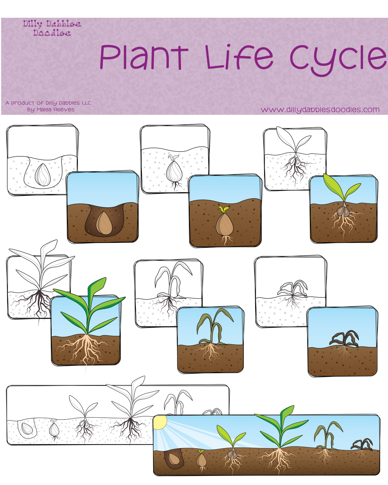 Plant Life Cycle Freebie