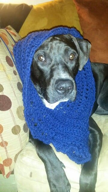 Started knitting so Bud got a new scarf :)