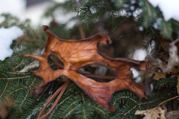 Brown Oak Leaf Leather Mask by *OsborneArts on deviantART