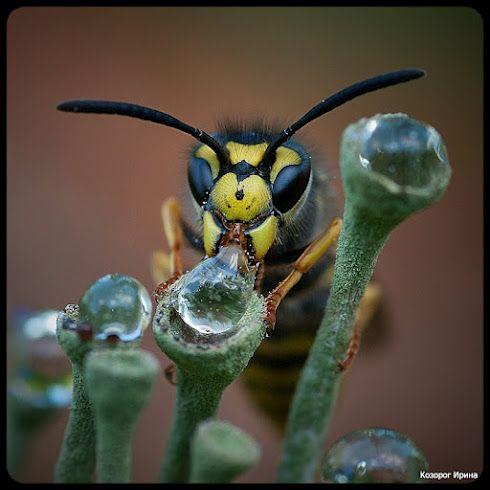 gotas para los insectos