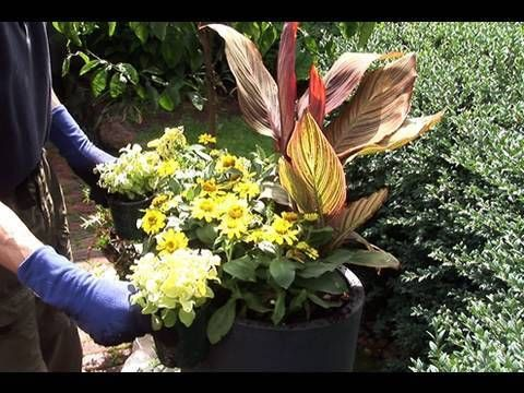 Http Youtu Be Great Video On Planting Canna In Pots