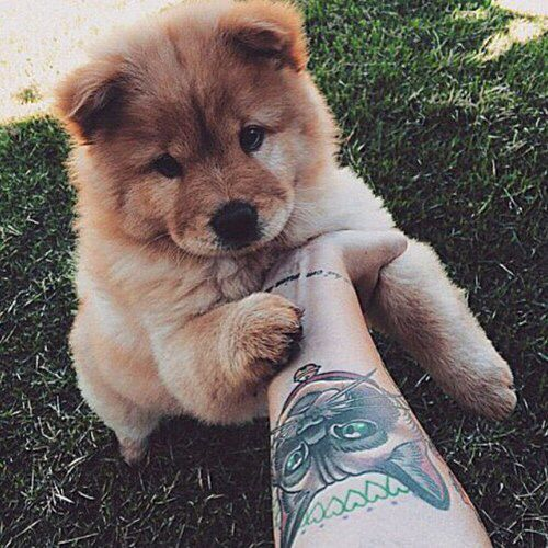 Adorable Animal Cute Dog Dogs Fluffy Love Pet Puppies