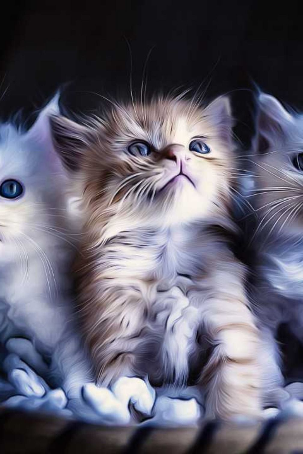 Kitten Cats Cute Babies Animal Adorable Cuteness Photooftheday Beautiful Wonderful Amazing Awesome Hdwall Animals Beautiful Animals So Cute Images