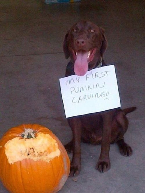 Pumpkins for Halloween (19 photos)