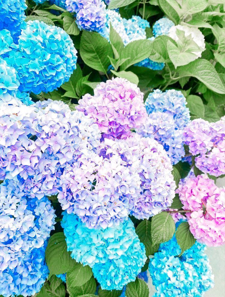 𝑛𝑜𝑡 𝑚𝑦 𝑝𝑖𝑐 In 2020 Flower Power Flowers Keep It Cleaner