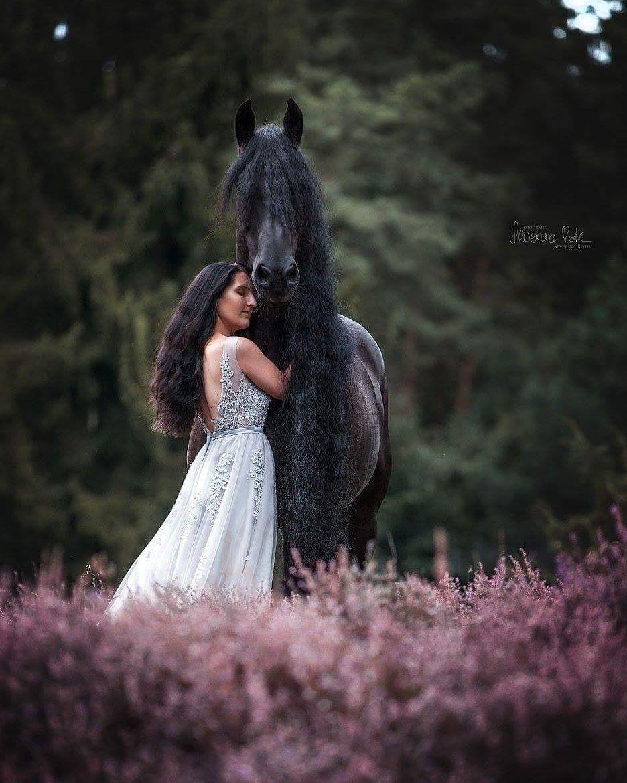 Пин от пользователя Цири ️ на доске Horse   Фото с ...
