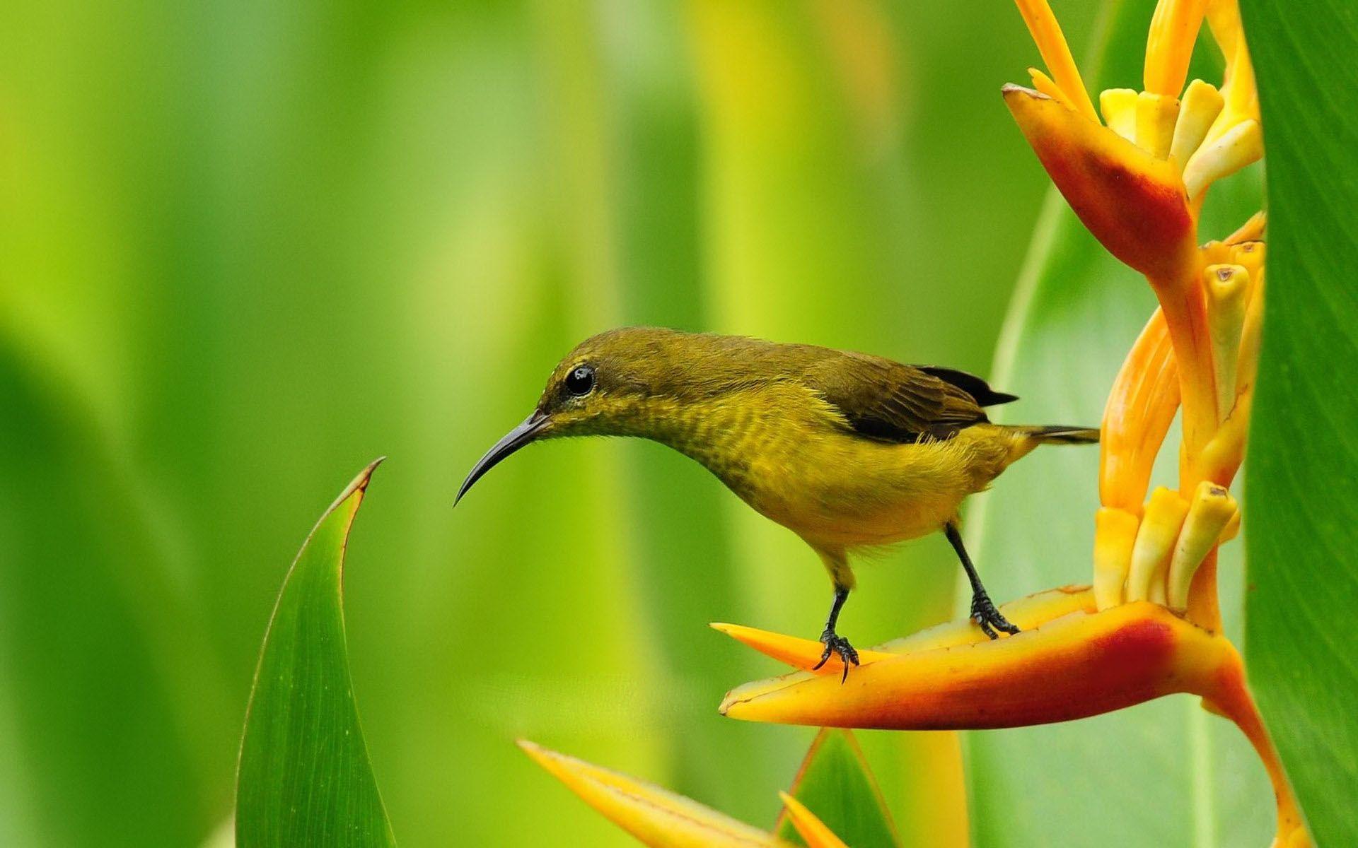 HD wallpaper download Sparrow Bird Nature Desktop HD