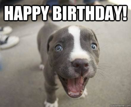 Image result for happy birthday pit bull pix