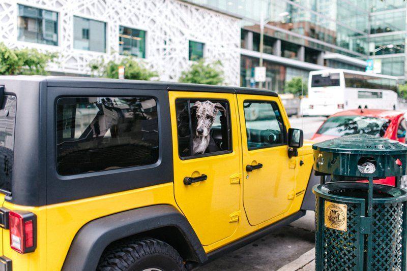 Dog City San Francisco California Roadtrip San Francisco - Vancouver