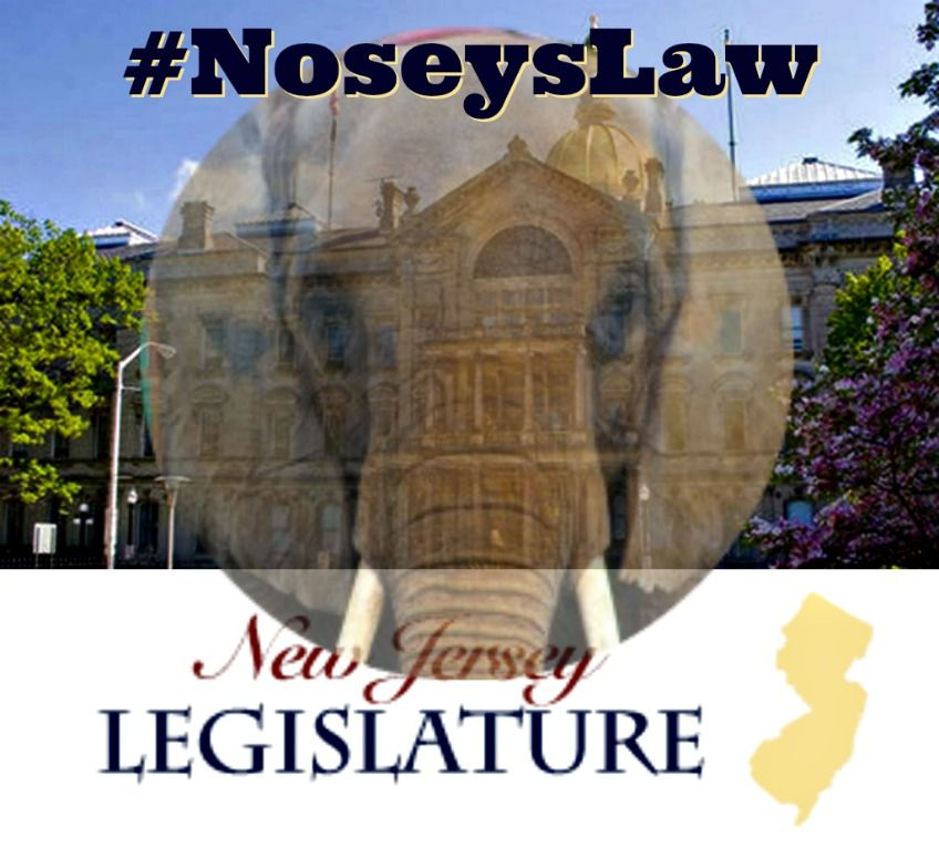 Pin On Action For Nosey Now