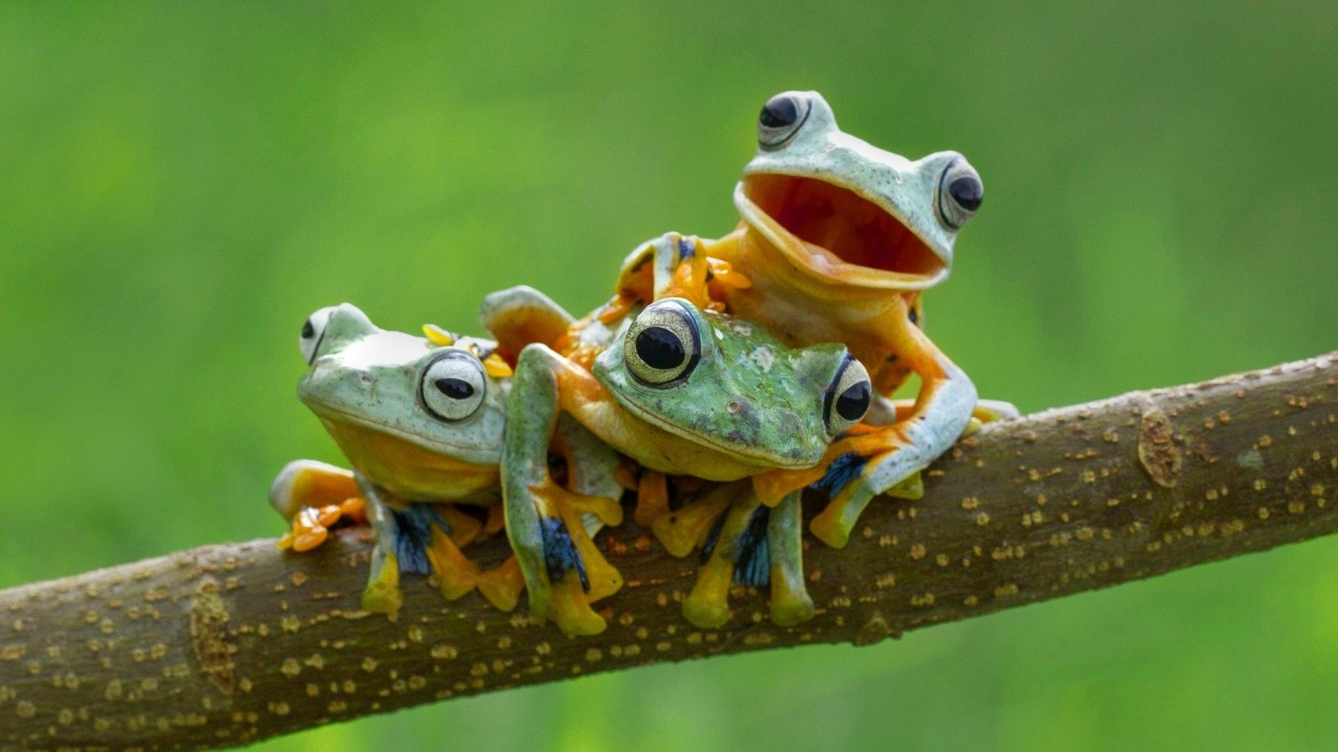 Frogs Images Frog Wallpaper HD And Background Photos 1920x1080 58 Wallpapers
