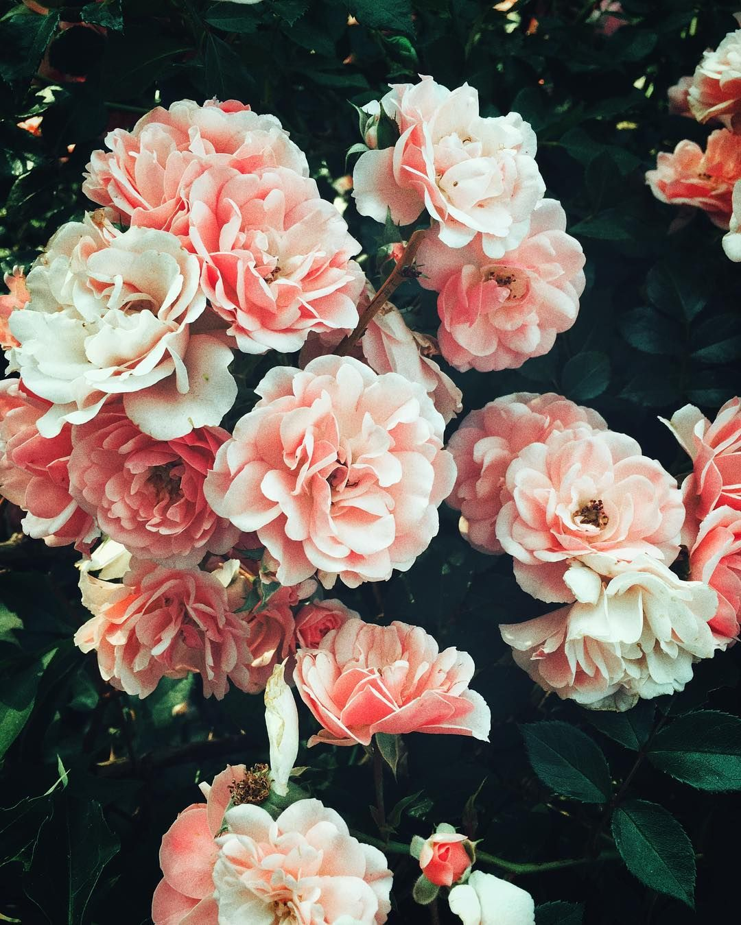 What love means flowers and plants beautiful words about love and life from amy krouse rosenthal who died this week izmirmasajfo