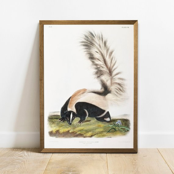 Skunk Print Antique Animal Painting Vintage Drawing Poster Wall Art Decor Large Tailed Skunk Vin Vintage Drawing Animal Paintings Poster Wall Art