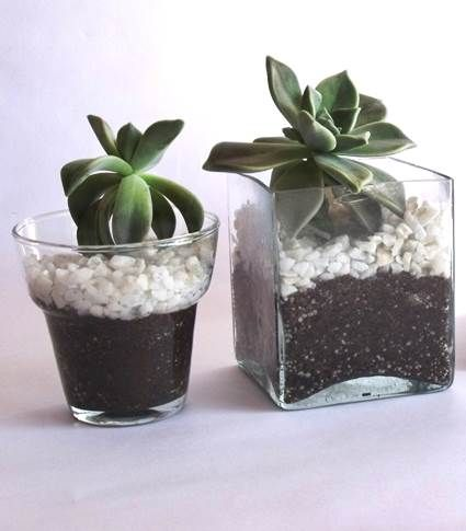 macetas de vidrio macetas vidrio y suculentas