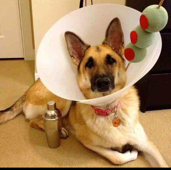 Hilarious German Shepherd Costume Dog Halloween Costumes Dog