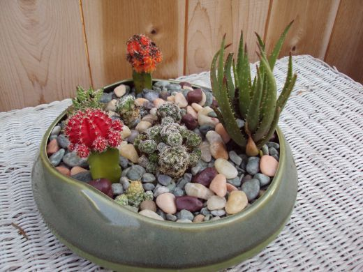 How to make a cactus garden cacti gardens and plants - How to make a succulent container garden ...
