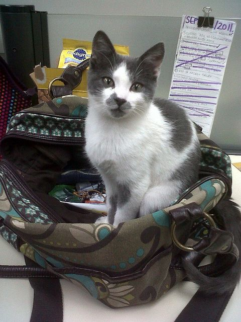 Sara Toro I love Pet friendly offices!!!! Taking My cat to work makes every day a happy day!!! ♥