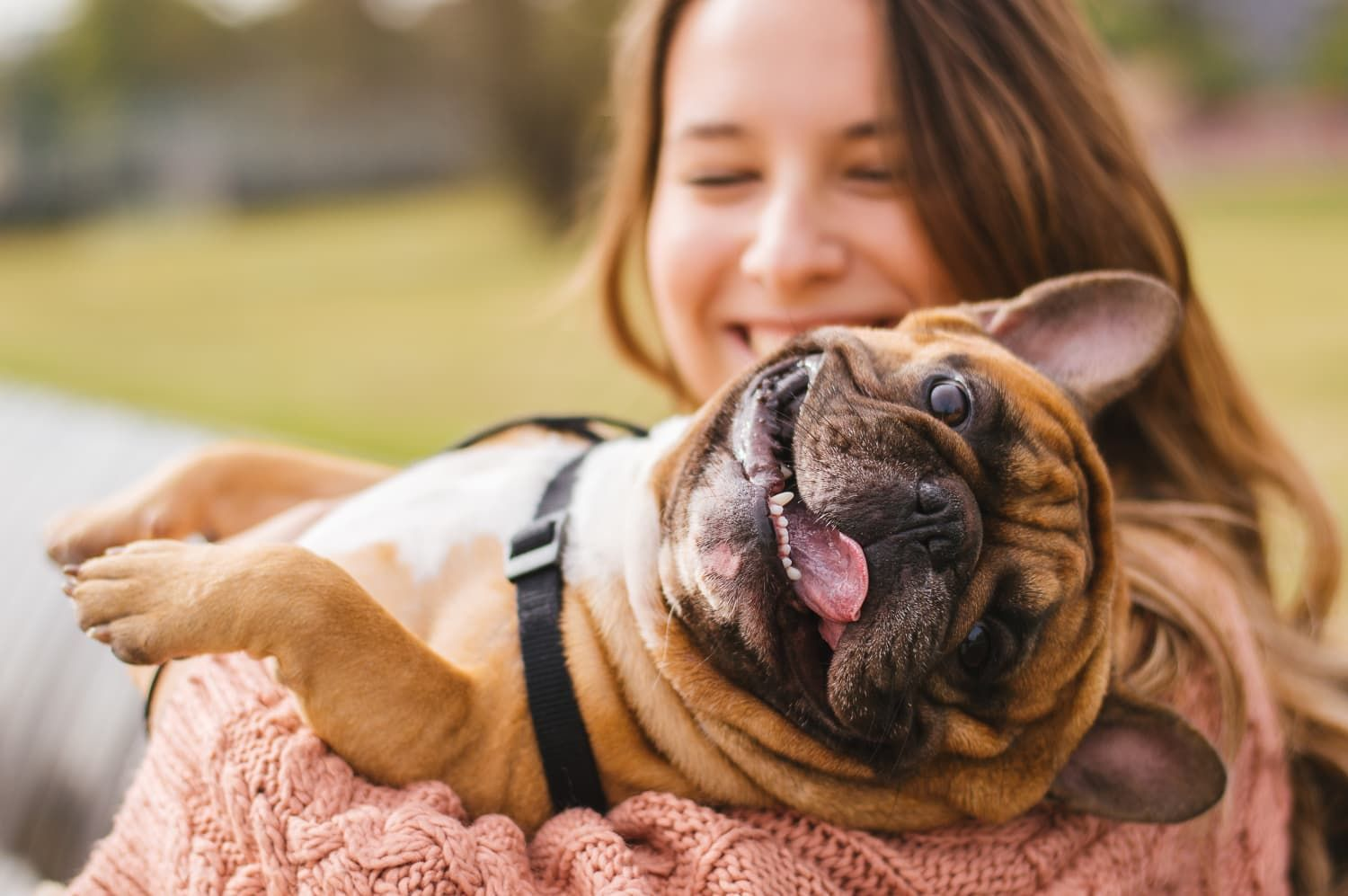 Dog Owners Are Happier Than Cat Owners, According to a New