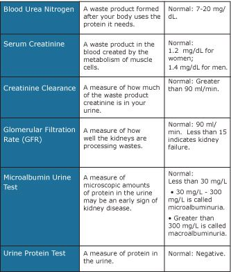 Renal Function Test Normal Values Google Search