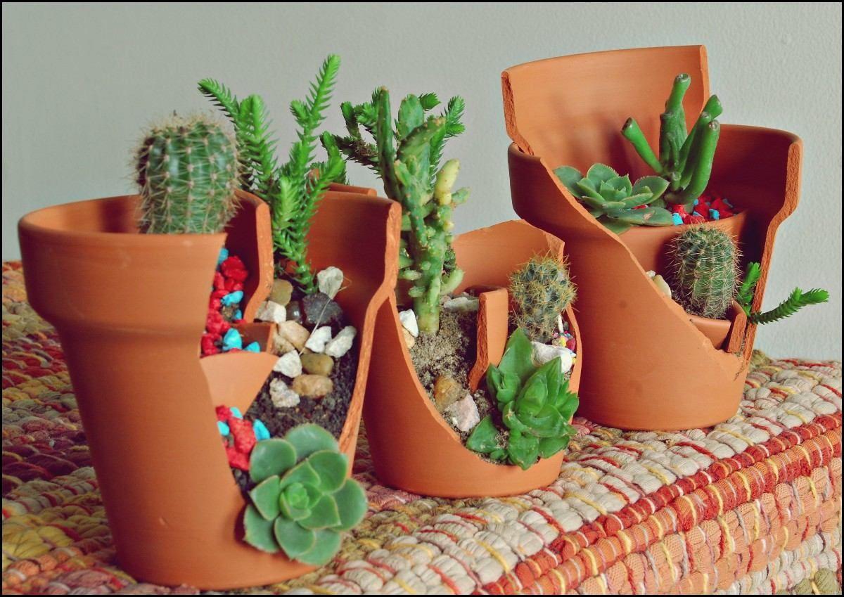 41++ Macetas originales para cactus trends