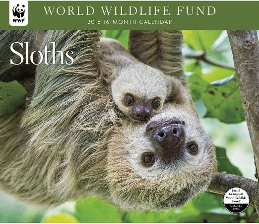 3 Sloth Calendars To Kick Start Your Year All Things Sloth Animals Sloth Animal Photo