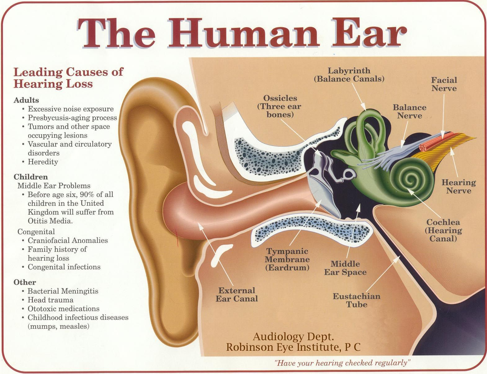 hight resolution of the ears are connected to the brain the which interprets our world of random stimuli the brain helps us understand what makes otherwise random blasts of