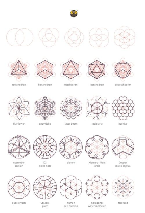 Geometry Matters:  Various nature elements that abide by geometric laws and construction patterns.