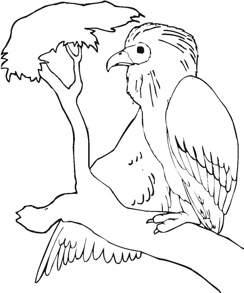 Buzzard Is Sitting On The Tree Branch Coloring Page Tree