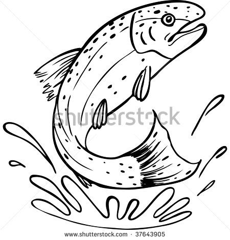 Rainbow Trout Drawing Template Trout Jumping Stock Photos