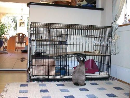 the best area to place the rabbit cage in the house