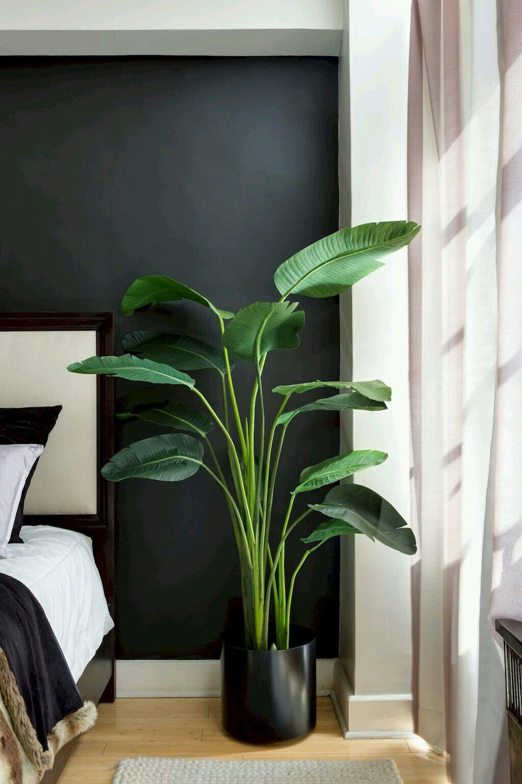 Pin By Rosalie James On Bohooo Bedroom Plants House Plants Indoor Birds Of Paradise Plant