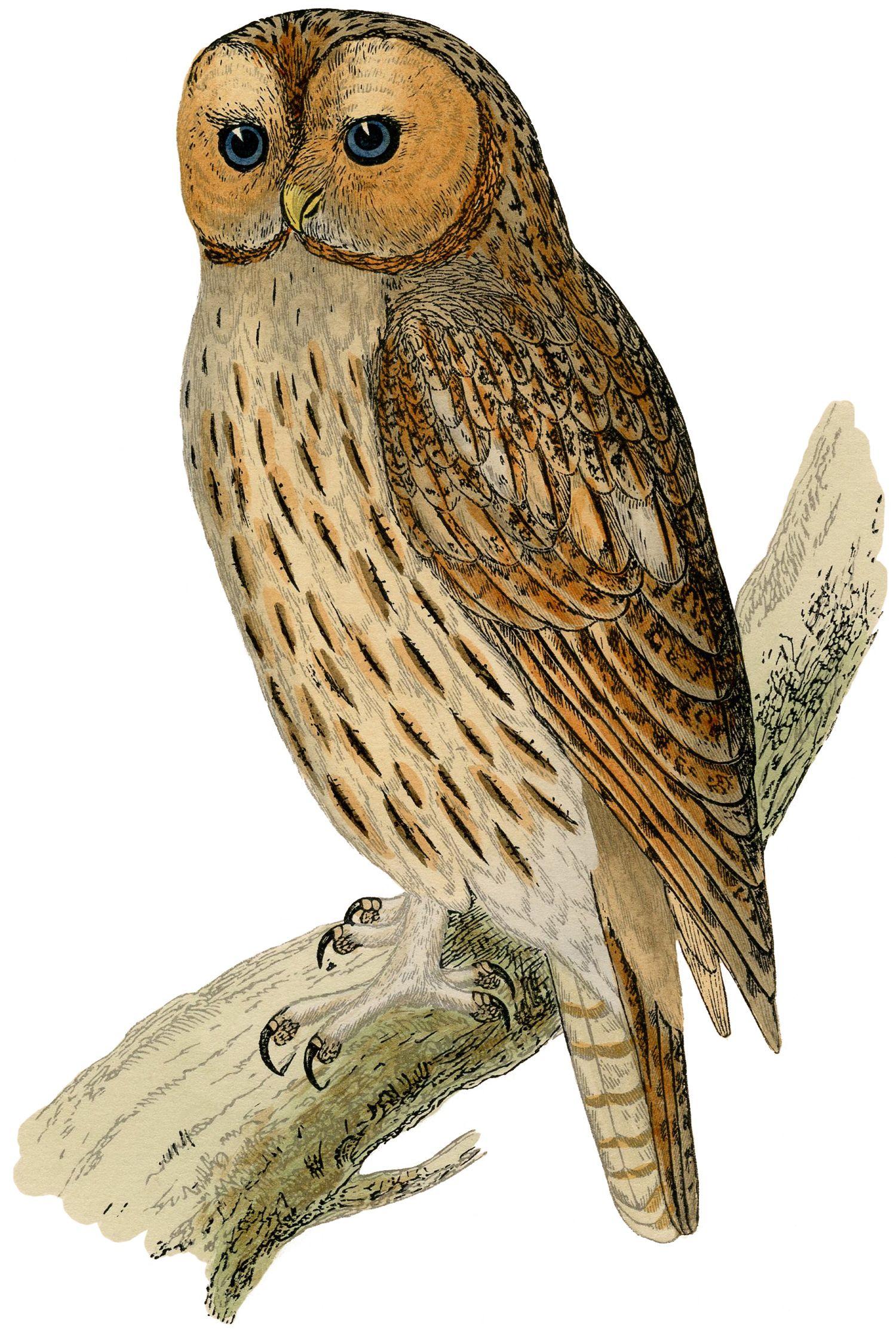 Vintage owl art for