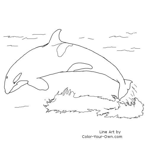 orca coloring page picture