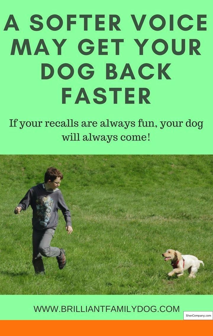 How To Train My Dog To Stop Play Biting And How To Train Your Dog